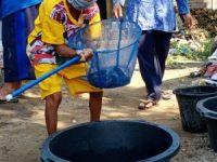 Panen Lele Hasil Budikdamber, ICKK Karanganom Siap Mandiri Dalam Pemenuhan Gizi Keluarga