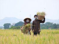 Atasi Kelangkaan, Stok Pupuk Non Subsidi Akan Ditambah