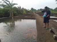 Lahan Kas Desa Mangkrak, Warga Sulap Menjadi Kolam Ikan