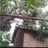 Suara Tangis Anak Bersautan, Angin Kencang Terjang Wilayah Ngawen dan Klaten Utara